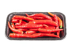 Hot red chili or chilli pepper isolated on white background Royalty Free Stock Images