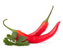 Hot red chili or chilli pepper and parsley leaves still life Royalty Free Stock Photos