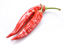 Hot red chili or chilli pepper on white Royalty Free Stock Image