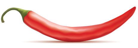 Hot red chili pepper Stock Images