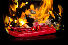 Hot red chili peppers Royalty Free Stock Photo