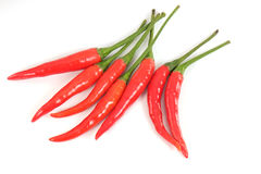 Hot red chili. Royalty Free Stock Photo