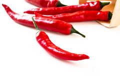 Hot red chilli pepper on a white background Stock Image