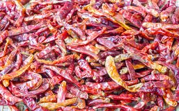 Hot red dry chili or chilli pepper Stock Image