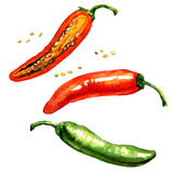 Hot red, green chili or chilli pepper isolated, watercolor illustration. Hot red and green chili or chilli pepper with seed isolated, watercolor illustration on Stock Photography