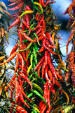 Hot red green chilly peppers Royalty Free Stock Photography