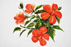 Hot red hibiscus Royalty Free Stock Images