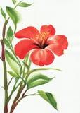 Hot red hibiscus Stock Photos