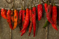 Hot chili pepper Royalty Free Stock Images