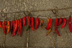 Hot chili pepper Royalty Free Stock Photography