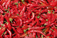 Hot red peppers in the summer sun Stock Photos