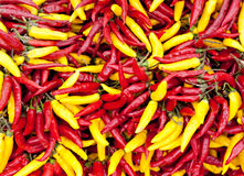 Hot red and yellow chili pepper Stock Images