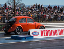 Hot Rod Beetle Stock Images