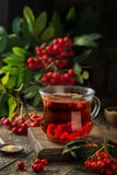 Hot rowanberry tea in glass cup. Rustic background Stock Photos