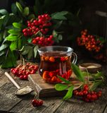Hot rowanberry tea in glass cup,. Rustic background, square image Stock Photography