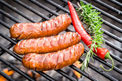 Hot sausage on the grill with chilli and rosemary Royalty Free Stock Image