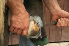 Hot Shoeing the Horse. Farrier places the hot horse hoe onto the hoof before he nails it on Stock Images