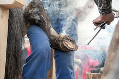 Hot shoeing the horse Stock Photos