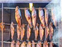 Hot smoked salmon hanged in the smokehouse. Lithuania Stock Images