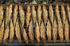 Hot smoked whitefish on the grill. Hot smoked fish whitefish on the grill close to Royalty Free Stock Photos