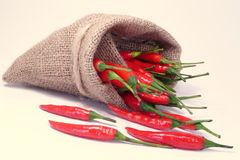 Hot Spice. Red chilis meets a small bag royalty free stock photography
