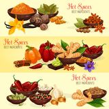 Hot spice banner of natural food ingredient. Chili pepper, ginger and nutmeg, garlic, cinnamon and vanilla, anise star, cardamom and bay leaf, turmeric, wasabi stock illustration