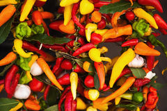 Hot spices Royalty Free Stock Images