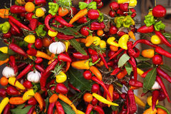 Hot spices at a string Stock Photography