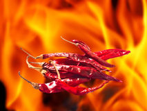 Hot and spicy dried chili. With flame background Royalty Free Stock Photos