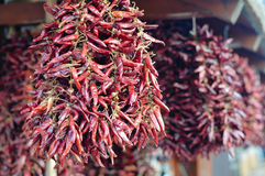 Hot spicy traditional chilli pepper paprika hanging in bunch for sale in Hungary Royalty Free Stock Images