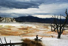 Hot Spring. Hell-like scenery of Big Mammoth hot spring, Yellowstone National Park, Wyoming royalty free stock images