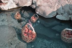 Hot spring too hot to boil eggs basket full of eggs stock images