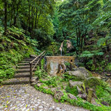 Hot-Spring Pool in Tropical Forest Royalty Free Stock Photos