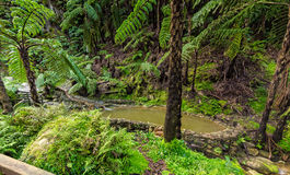 Hot-Spring Pool in Tropical Forest Stock Image