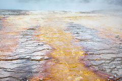 Hot Spring Runway. This was at the Grand Prismatic Spring at Yellowstone National Park. The hot spring had bands of color leading out from it like tentacles Royalty Free Stock Photography