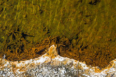 Hot Spring Shore Contrast. This image showed the contrast between the white shoreline and the green colored water of a hot spring in Yellowstone National Park Royalty Free Stock Photos