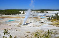 Erupting geyser in Yellowstone, Wyoming Royalty Free Stock Images