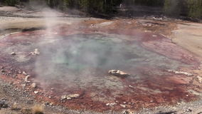 Hot Spring Yellowstone N.P. stock video