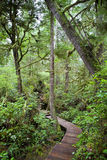 Hot Springs Cove Rainforest Royalty Free Stock Photo