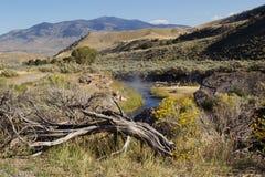 Hot Springs för att bada i Yellowstone parkerar Arkivbild