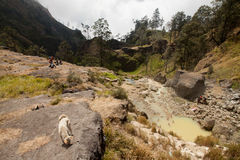 Hot springs at the Mount Rinjani Volcano, Lombok, Indonesia. Hot springs with yellow water near Mount Rinjani volcano, Lombok, Indonesia Stock Photography