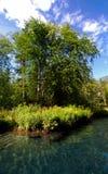 Hot Springs Vegetation Royalty Free Stock Images