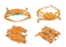 Hot steam crab seafood collection Royalty Free Stock Photo