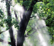 Hot steam shine in the morning sun Oak leaves. Royalty Free Stock Images