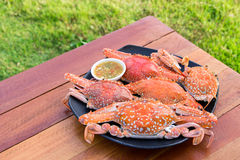Hot Steamed Blue Crabs on the black plate Royalty Free Stock Images