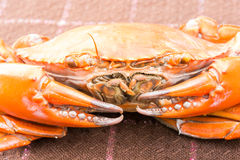 Hot Steamed crab Royalty Free Stock Photo