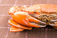 Hot Steamed crab Stock Images