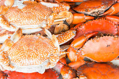 Hot Steamed crab Royalty Free Stock Photography