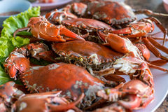 Hot steamed red crab prepare to eat Stock Photography