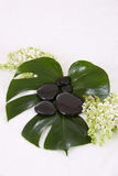 Hot stones. On a bed of big green leaves royalty free stock images